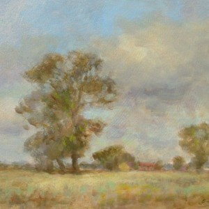 Norfolk Elms