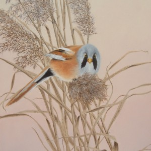 X (SOLD) Bearded Reedling