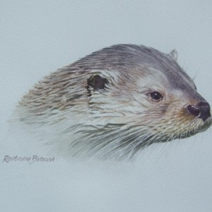 X04 (SOLD) Fenland Otter