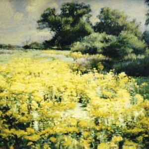 X3 (SOLD) Glorious Ragwort Bennett Oates