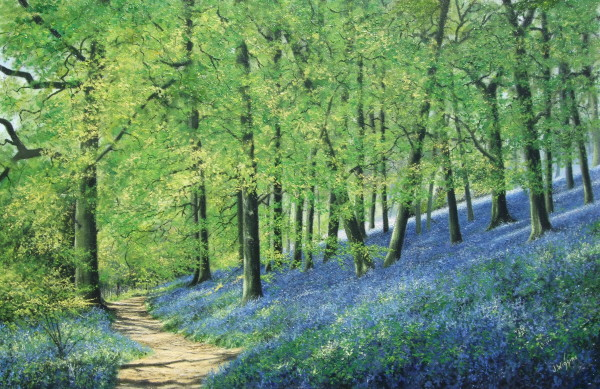X10 (SOLD) Bluebell