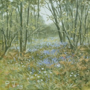X01 (SOLD) Bluebells in the wood