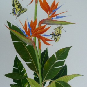 X (SOLD) Bird of Paradise Flowers and Swallowtails