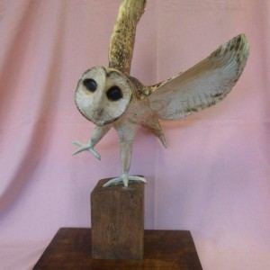 X (SOLD) Barn Owl in Flight no1 (Sycamore with Pyrography finish)