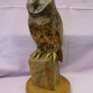 X(SOLD) Short Eared Owl (Lime)