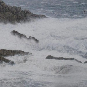 Crashing Surf against the rocks (Herring Gull)