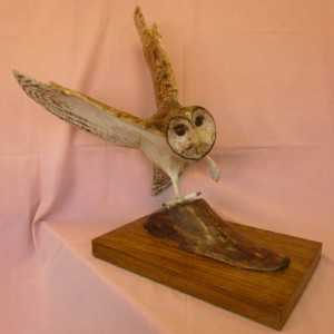X (SOLD) Barn Owl in Flight no 2 (Sycamore with Pyrography finish)
