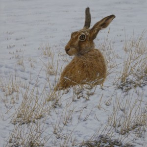 X (SOLD) Winter Hare