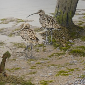 X (SOLD) Curlews at Low Tide