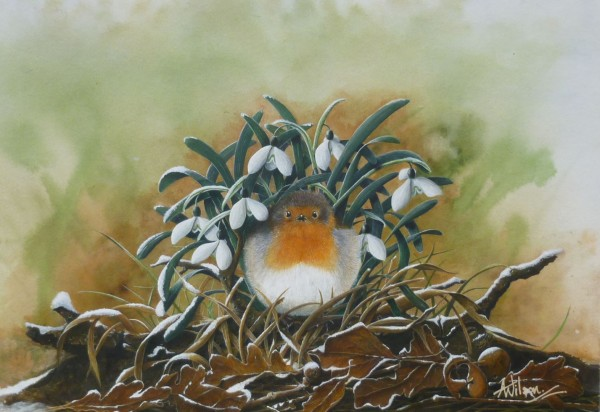 X(SOLD) Sheltering Robin