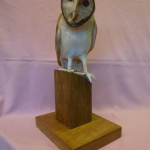 X (SOLD) Barn Owl (Sycamore with Pyrography finish)
