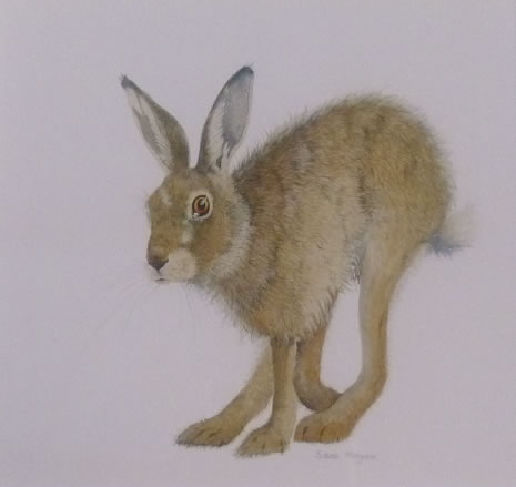 "Hare Collection (SOLD)  ""On the Move"""