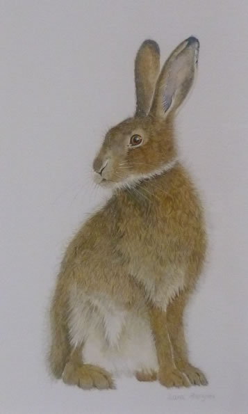 """Hare Collection (SOLD) """"Sitting"""""""