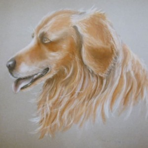 Dog Commission in Pastel (Buffy) Golden Retriever (SOLD)