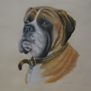 Dog Commission in Pastel (Dexter) The Boxer (SOLD)