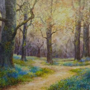Bluebellwood