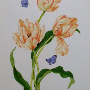 (ref a) Tulips and Holly Blue Butterflies