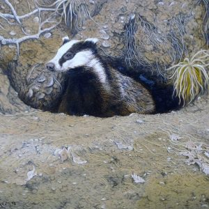 X (SOLD) Venturing Out (Badger)
