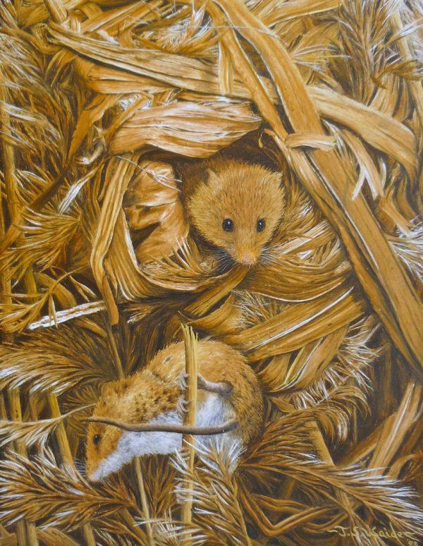 X(SOLD) Harvest Mice