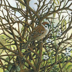 X (SOLD) Tree Sparrow