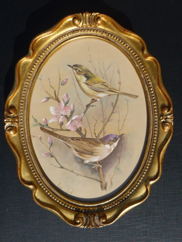 Bird Studies – Chiffchaff and Blackcap on Pink Blossom