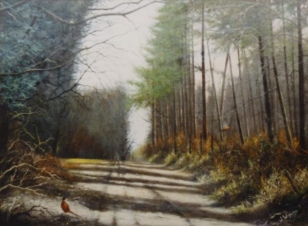 X23 (SOLD) Pinewoods