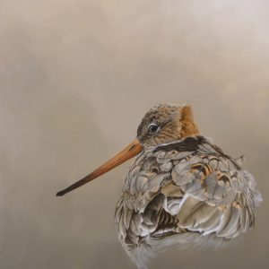 X (SOLD) Black Tailed Godwit