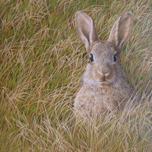 X (SOLD) Alert Rabbit – Signs of Spring