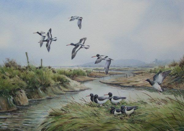 Oystercatchers at Blakeney