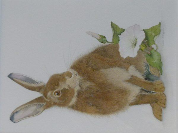 Hare and Convolvules