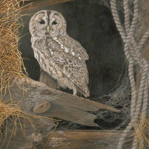 High Perch – Tawny Owl (Grey Phase)