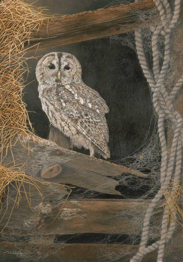 High Perch – Tawny Owl (Grey Phase)