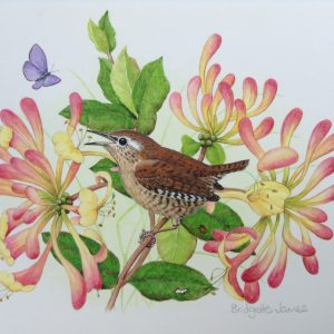 (ref b) Wren on Honeysuckle