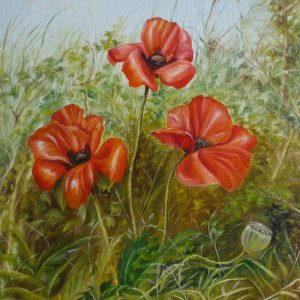 Poppies in a hedgerow