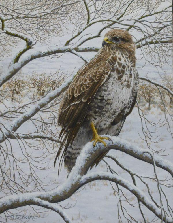 X (SOLD) Buzzard in Winter